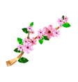Origami branch with pink cherry blossom vector image