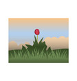 red tulip against the sky and grass