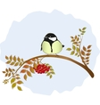 Tit sitting on a branch of mountain ash with vector image