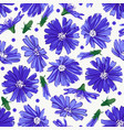 floral seamless pattern with chicory vector image vector image