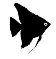 black silhouette of aquarium fish on white vector image vector image
