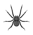 Black Spider Icon on White Background vector image vector image