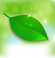 Fresh background Leaf vector image vector image