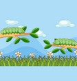 scene with caterpillars on branches vector image