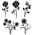 silhouette roses and daisies vector image vector image