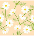 white cosmos flower on beige ivory background vector image