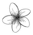 exotic tropical hawaiian summer flower vector image vector image