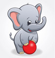 infant elephant playing with red ball vector image vector image