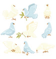 peace symbol white dove or pigeon isolated animal vector image vector image