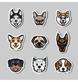 Dogs dog breeds vector image
