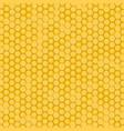 bee honeycomb vector image vector image