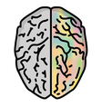 brain 1 vector image