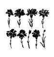 carnation hand drawn paint set vector image
