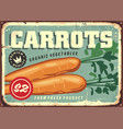 carrots vintage sign vector image