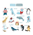 north or south polar animals cartoon design vector image