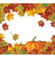 pumpkin autumn vector image