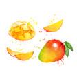 watercolor set mango vector image vector image