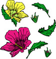 blooming pink and yellow mallow green leaves vector image vector image