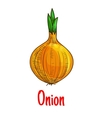 Bulb onion vegetable sketch isolated icon vector image vector image
