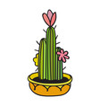 cactus with black contour vector image vector image