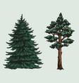 conifer trees colorful vintage concept vector image