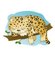 cute little leopard dozing vector image