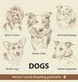 set hand drawing dogs 4 vector image vector image