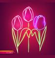 tulip flowers neon light vintage board vector image