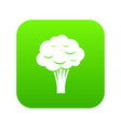 broccoli icon digital green vector image
