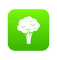 broccoli icon digital green vector image vector image