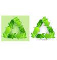 leaves recycle symbol vector image