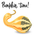 oblong striped pumpkin isolated on white vector image vector image