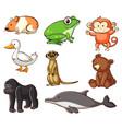 large set wildlife with many types land vector image