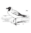 black headed seagull vintage vector image vector image