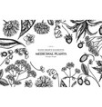floral design with black and white aloe calendula vector image vector image