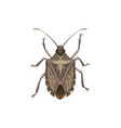 shield bug icon pest control insect extermination vector image vector image