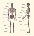 silhouette black human skeleton and part set card vector image