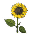 colored sunflower plant on white background vector image vector image