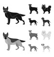 dog breeds blackmonochrom icons in set collection vector image