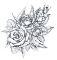 hand drawn rose flowers bouquet isolated on white vector image vector image