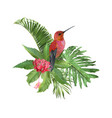 hummingbird tropic arrangement vector image vector image