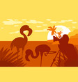 photographer photographs flamingo in nature vector image vector image