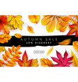 autumn sale seasonal fall discount advertising vector image