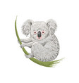 Cute cartoon character koala bear sitting on