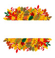 elegant and beautiful autumn leaves and elements vector image vector image