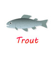 fresh trout fish in flat style vector image vector image