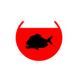 piranha in aquarium isolated predatory fish vector image