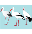 storks collection - vector image