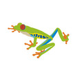 red-eye tree frog flat design vector image vector image