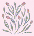tulips hand drawn flowers vector image vector image